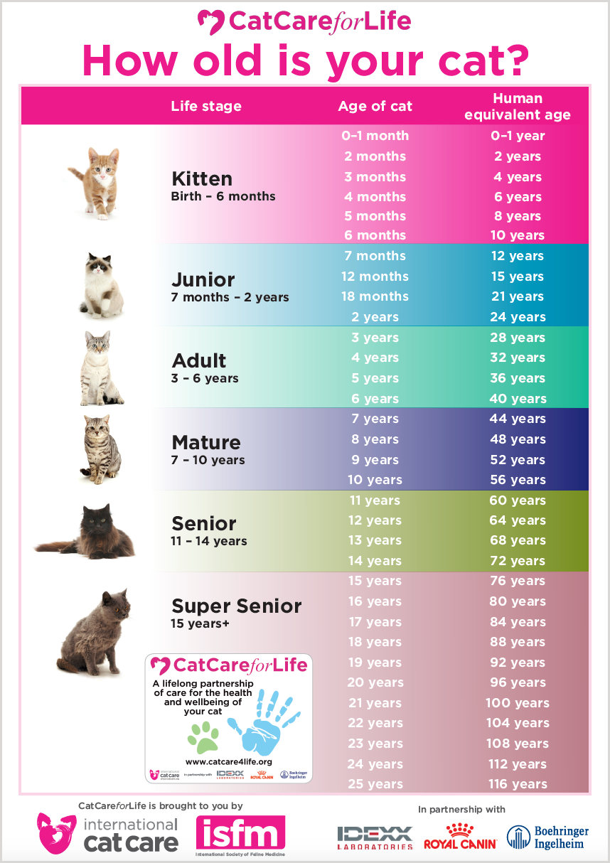 Life Stages Cat Care For Life
